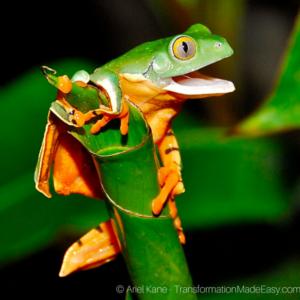 tell-it-like-it-is-frog